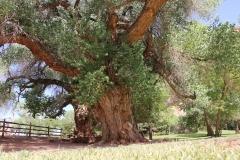 Baum-Nationalpark-Amerika