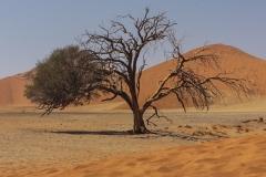 Düne-45-Namibia
