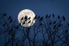 Die-Vögel